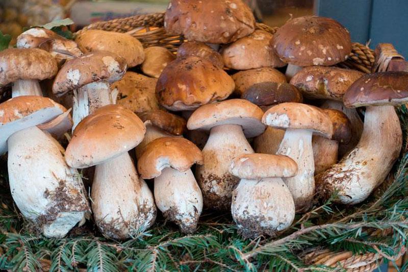 el otoño y el turismo micológico en Aragón